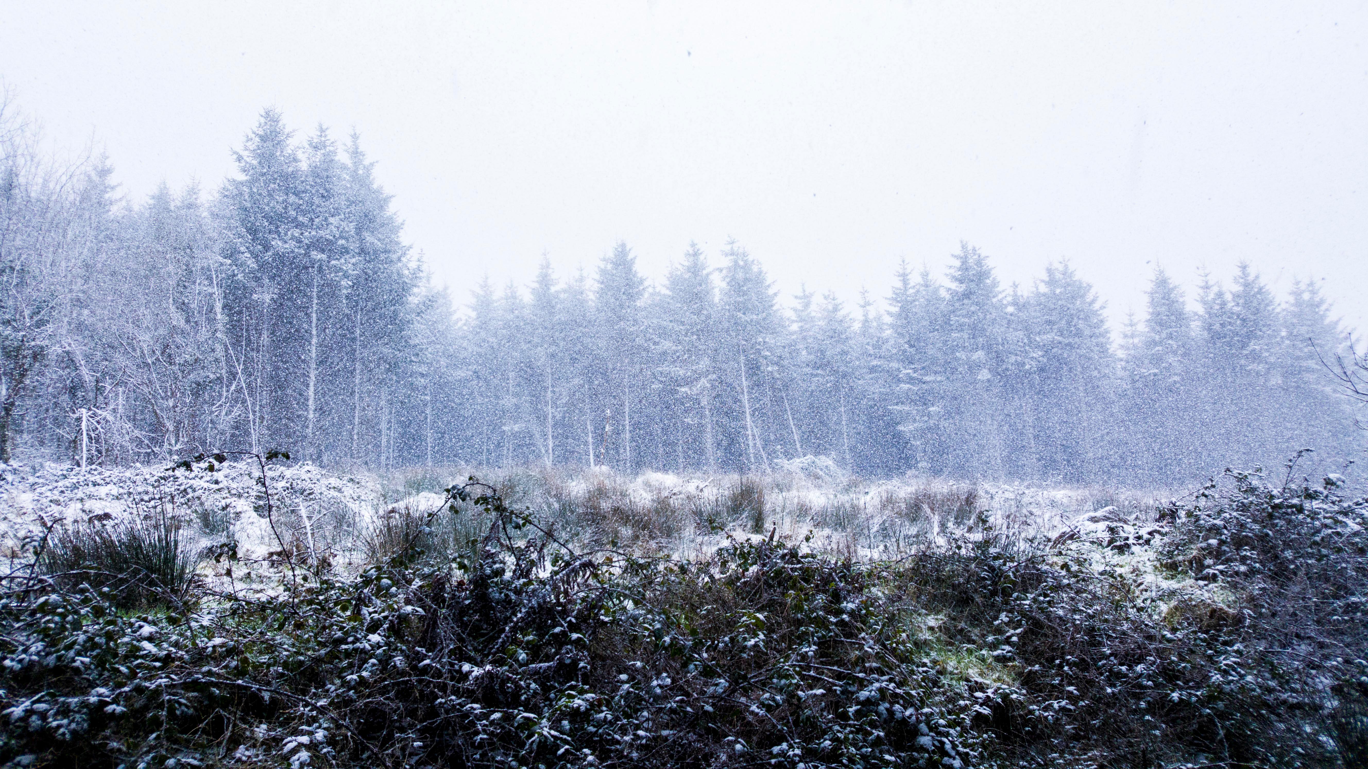 Snow photo in Limerick